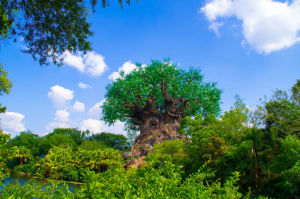 Beautiful day at Animal Kingdom