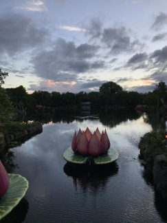 Rivers of Light Lotus Flower