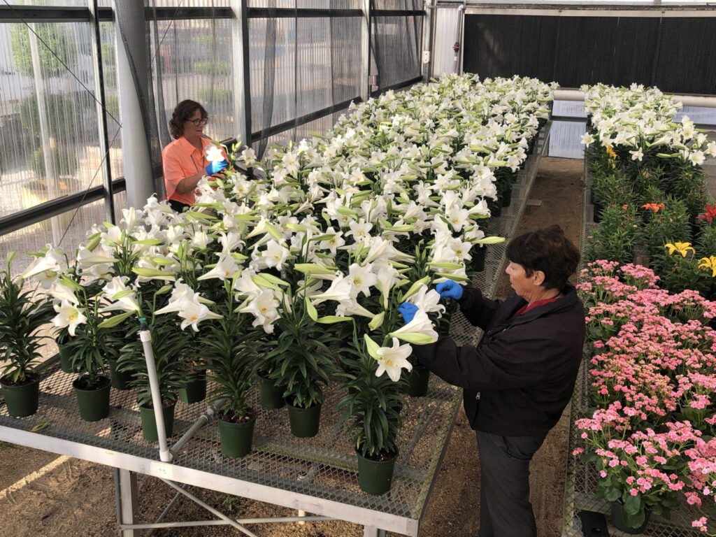 Walt Disney World Resort Donates Easter Lilies to Local Seniors